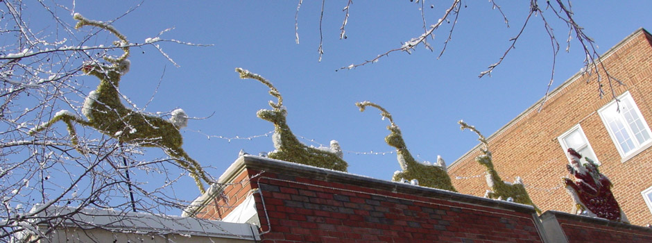 Reindeer on the Roof